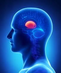 лечение опухолей гипофиза в Израиле