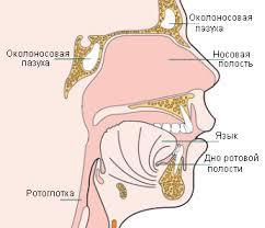 лечение опухолей носа и околоносовых придаточных пазух в Израиле