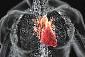 лечение пороков сердца и сосудов в Израиле