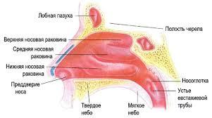 лечение болезней синусов (пазух) в Израиле