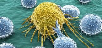 лечение волосатоклеточного лейкоза в Израиле